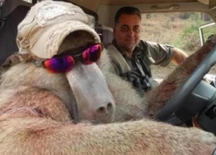 哈里德莫斯(右)与戴起太阳眼镜、已死去的狒狒合照。