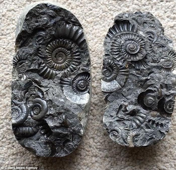 英国男子童年捡到怪石 劈开后发现1.8亿年历史菊石