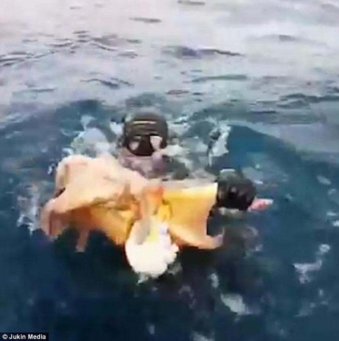 男子深潜后出水时惊觉背上依附着巨大章鱼