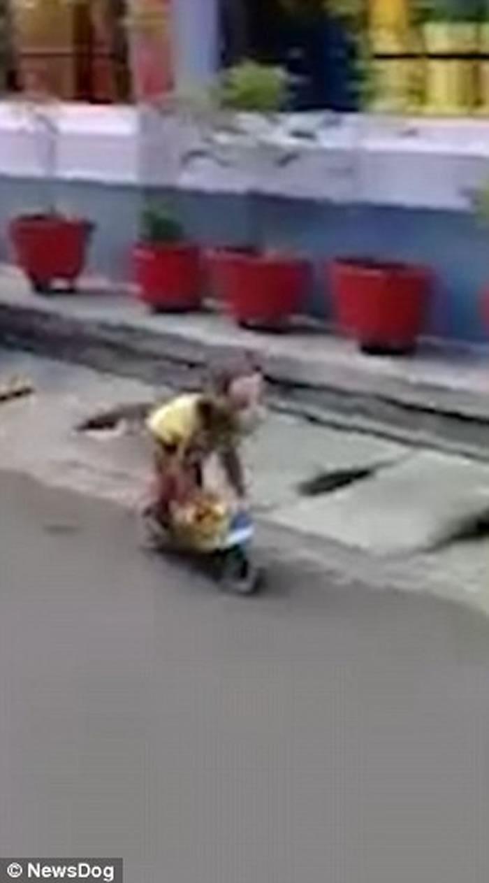 印尼东爪哇卖艺猴子驾驶超小型摩托车撞飞男童