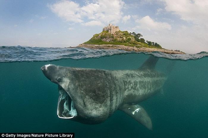 美国鱼类及野生动物管理局局长艾许表示,有很多生物在经由『腐化分尸』后,外观会与史前动物相同,像是『姥鲨。