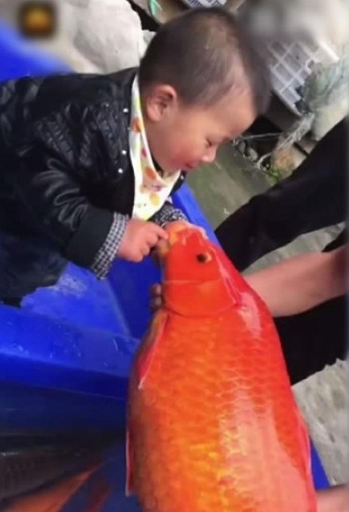 幼童和巨型锦鲤合影。