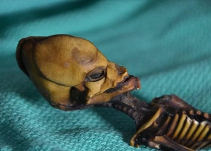 智利阿塔卡马沙漠干尸曾惹外星人疑云 最新研究:基因突变女童