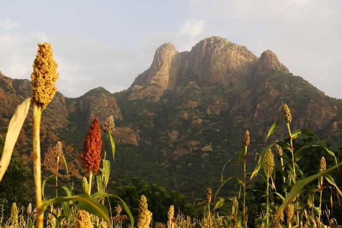 来自欧洲的姬红蛱蝶可能常在查德中部的格拉山脉(Guera Mountains)繁殖。 PHOTOGRAPH BY GERARD TALAVERA, NATION