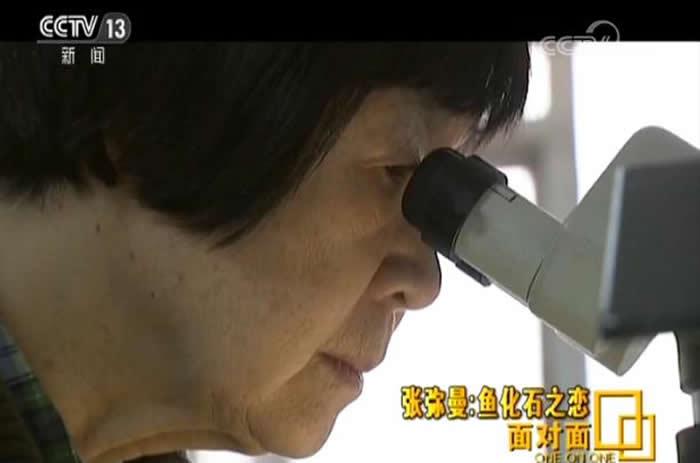 央视面对面:张弥曼的鱼化石之恋