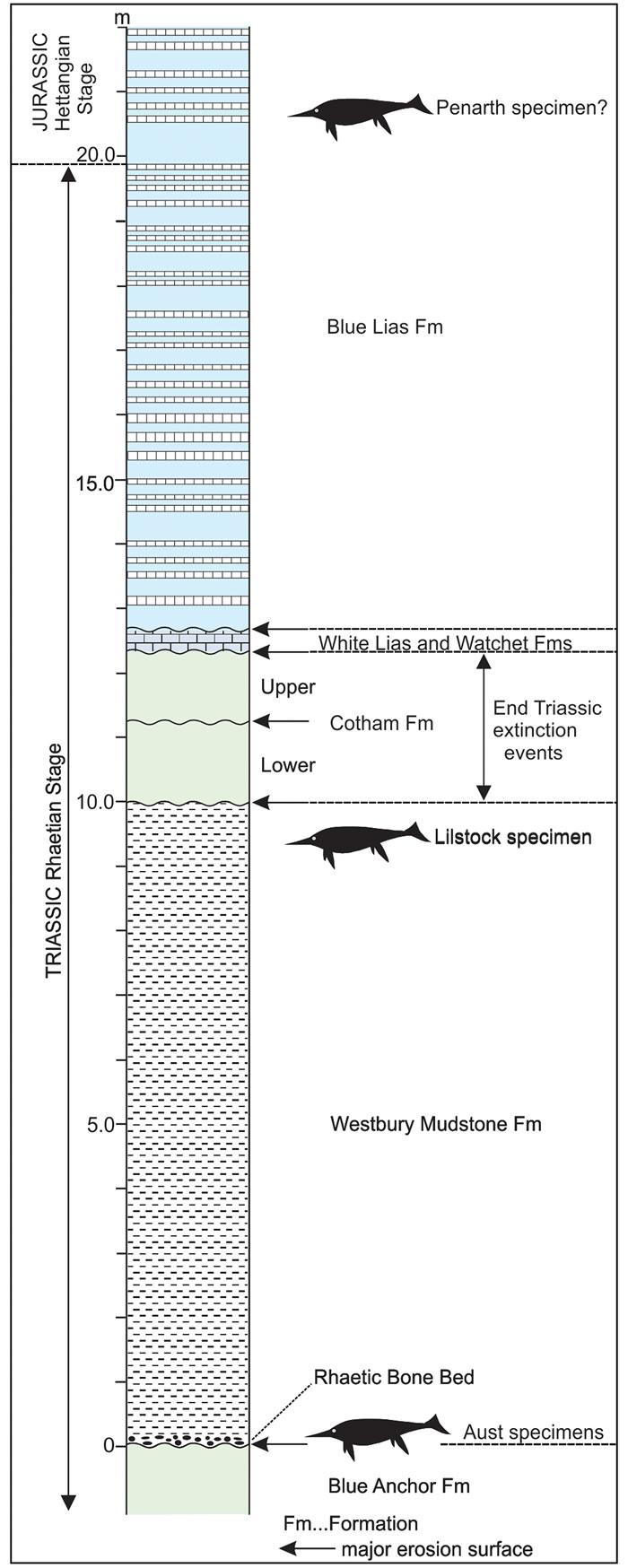 英国萨默塞特发现迄今为止最大海洋爬行动物化石
