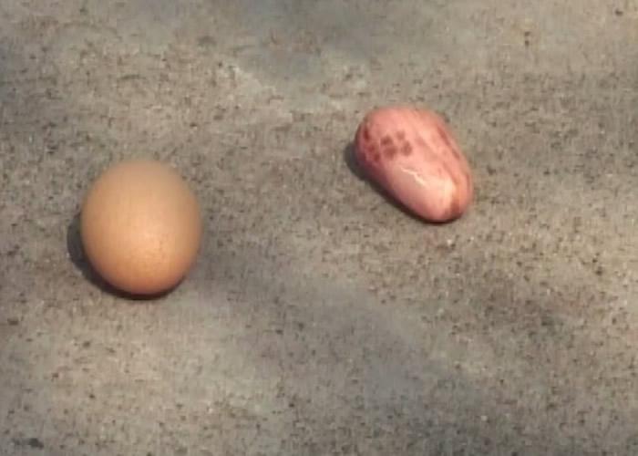 该母鸡最近生下的蛋,只有花生大小。