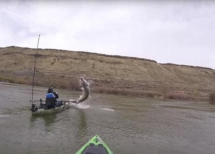 美国爱达荷州男子划艇钓鱼遇上2.5米巨型鲟鱼