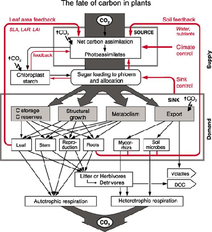 植物对二氧化碳浓度增加表现出的意外反应