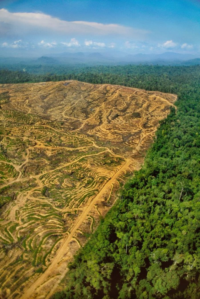 伐木让婆罗州的雨林伤痕累累。 PHOTOGRAPH BY FRANS LANTING, NATIONAL GEOGRAPHIC CREATIVE
