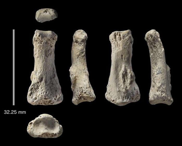 沙特阿拉伯东北部阿尔乌斯塔遗址发现的智人(Homo sapiens)手指骨化石遗存。 PHOTOGRAPH BY IAN CARTWRIGHT