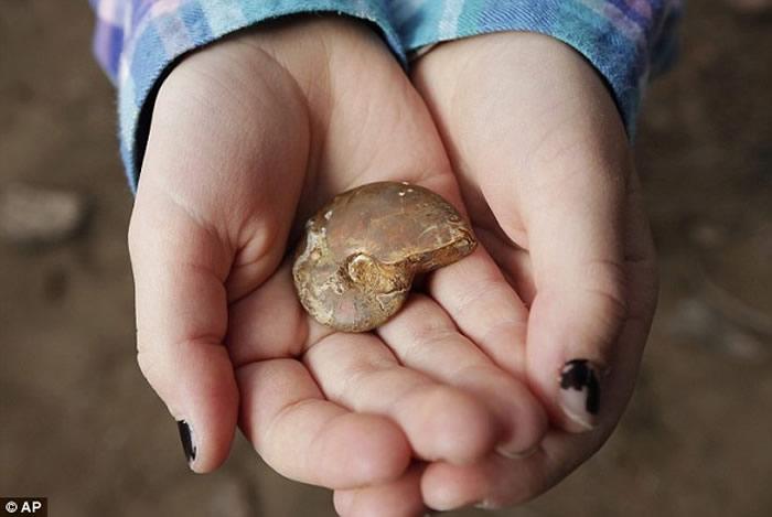 """美国俄勒冈州小女孩看足球赛""""太无聊"""" 球场边挖出6500万年前菊石化石"""