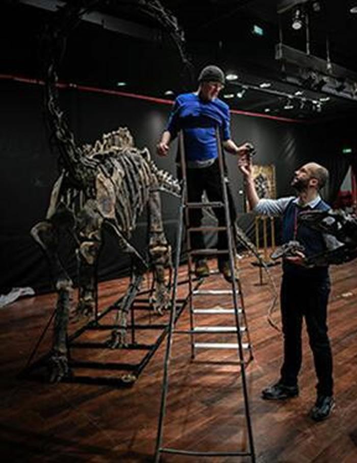 意大利科学顾问组装梁龙骨架化石