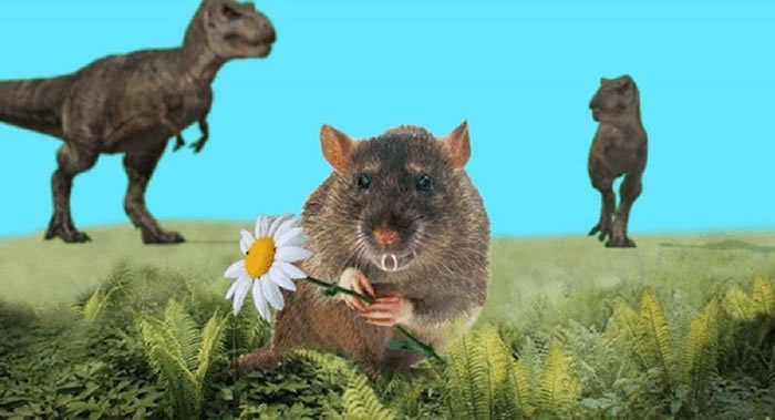 俄罗斯科学家发现远古哺乳动物新物种 类似于现代啮齿动物