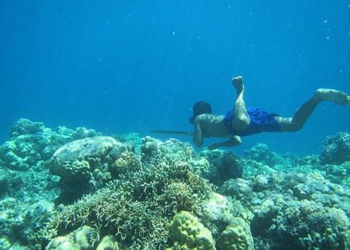 巴瑶族靠潜水找食物。