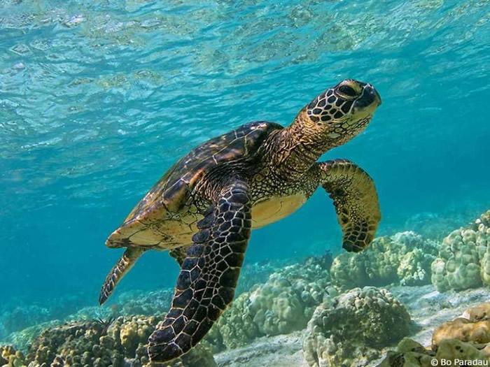 海龟懂得以地磁场特征寻回出生地。