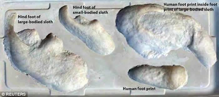化石足印显示,人类曾追踪大地懒作猎杀。