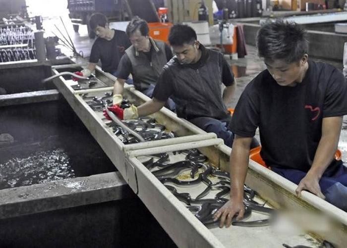 向日本输出鳗鱼及鳗苗,是台湾重要产业。(中时电子报图片)