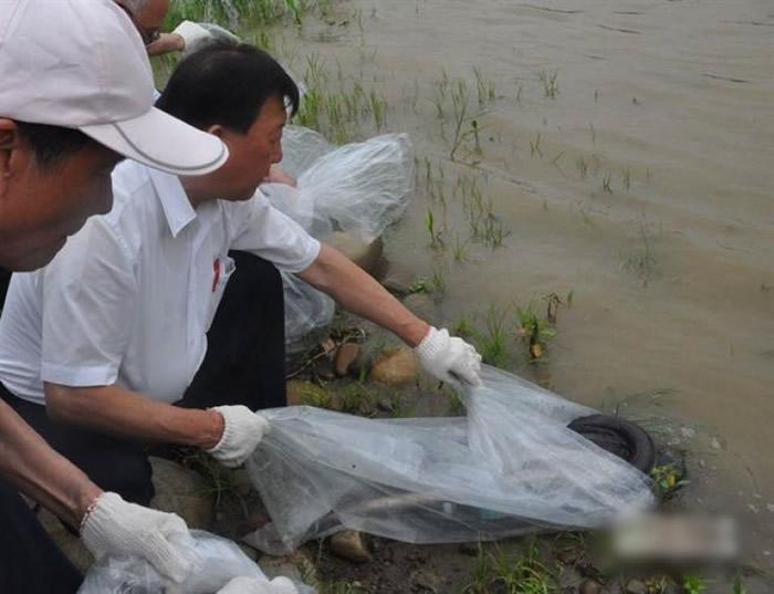 台湾新竹县年前放流母鳗,希望培育天然馒苗。
