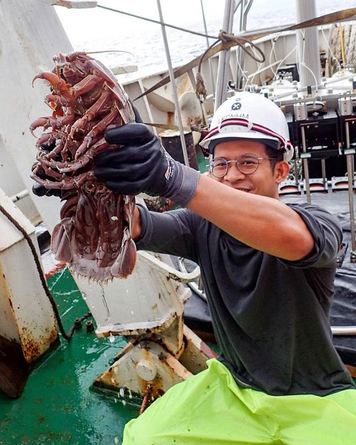 印度洋洋底发现巨型深海蟑螂