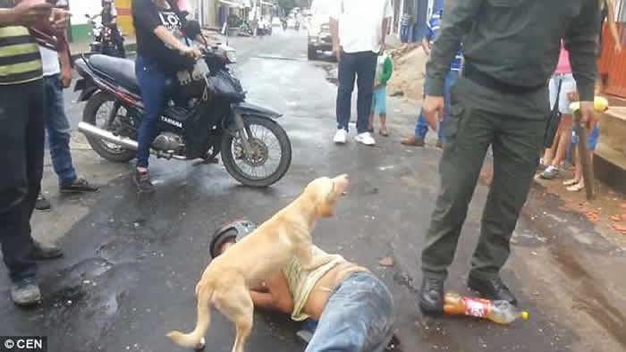哥伦比亚男子醉卧街头 忠犬护主不容旁人接近