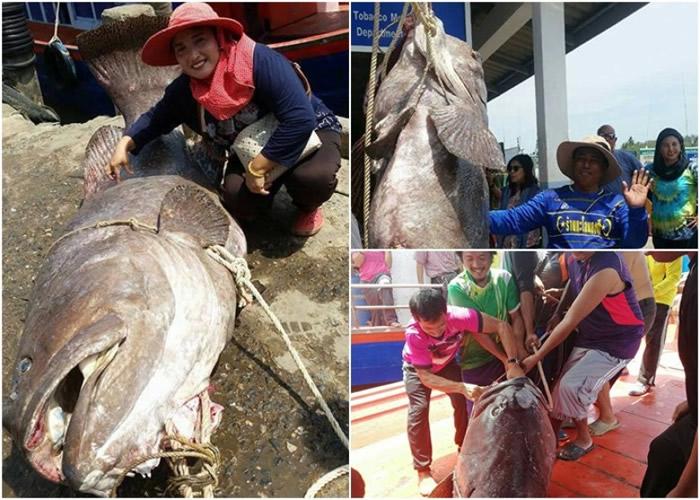 泰国渔钓起重达198公斤的深海野生巨型石斑鱼