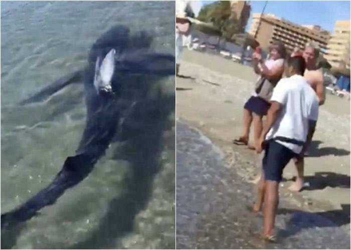 3米长大青鲨突闯西班牙安达卢西亚著名度假胜地太阳海岸