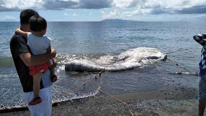 """菲律宾海滩发现6米长白色多毛""""海怪"""""""