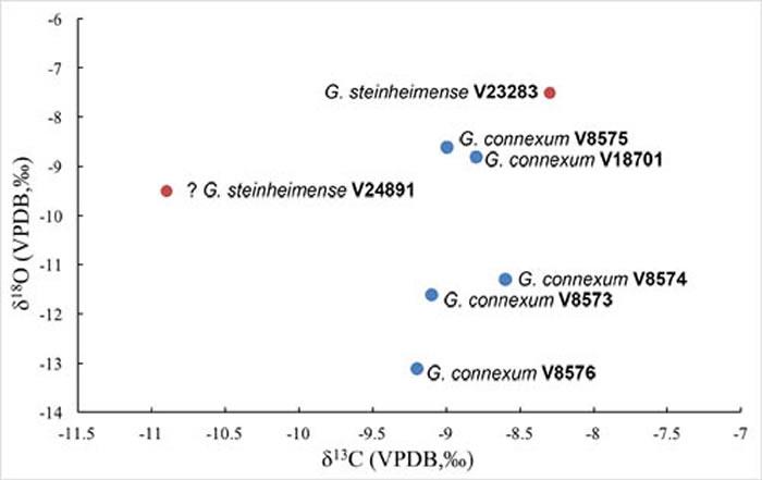 嵌齿象属碳、氧同位素分析结果 (吴妍供图)