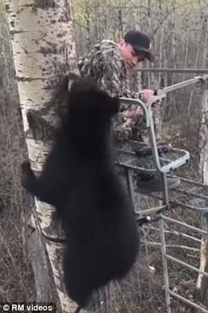 加拿大艾伯塔省少年首次外出捕猎就迎头遇上黑熊宝宝