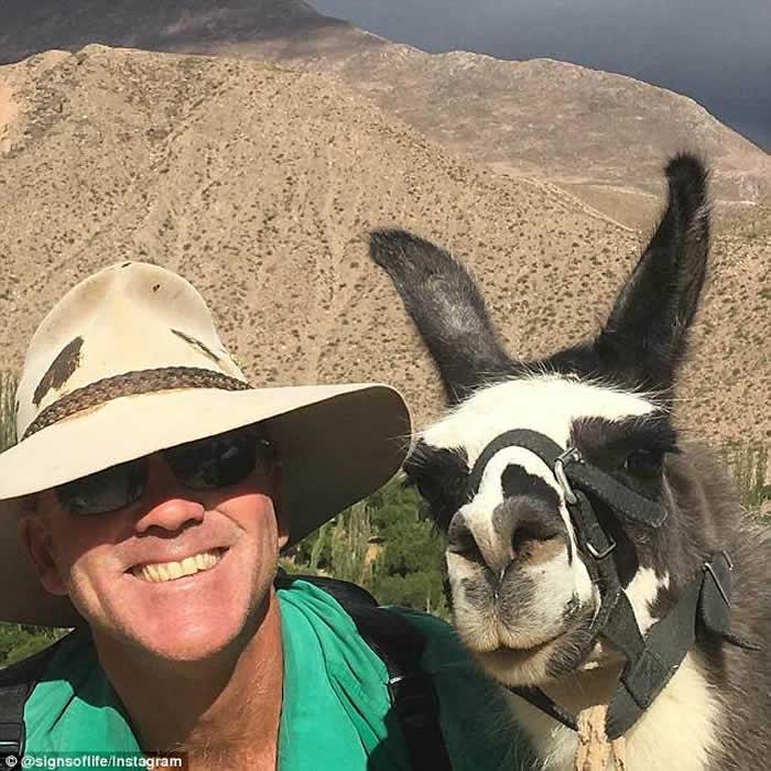探险家穿越澳洲沙漠被千上万只苍蝇将他与骆驼团团包围