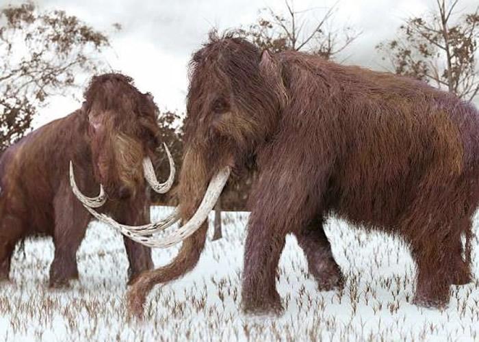 长毛象有望重现人间。