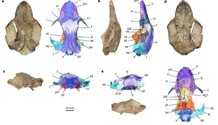 美国犹他州出土的1亿3千万年历史原始哺乳动物头骨化石或推迟大陆分裂时间