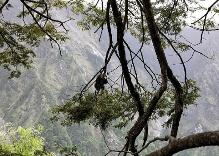 今次是卧龙境内今年第3次拍到熊猫宝宝。