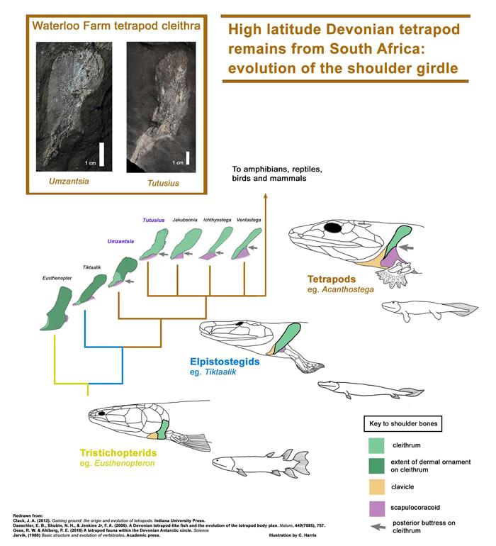南非极地附近发现3.5亿年前远古四足动物化石:Tutusius umlambo和Umzantsia amazana