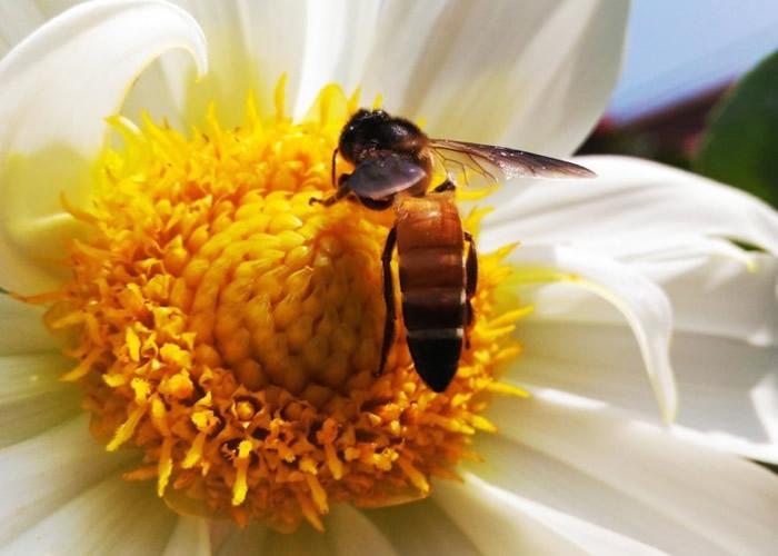 """研究指蜜蜂也能理解""""零""""这种抽象概念。"""