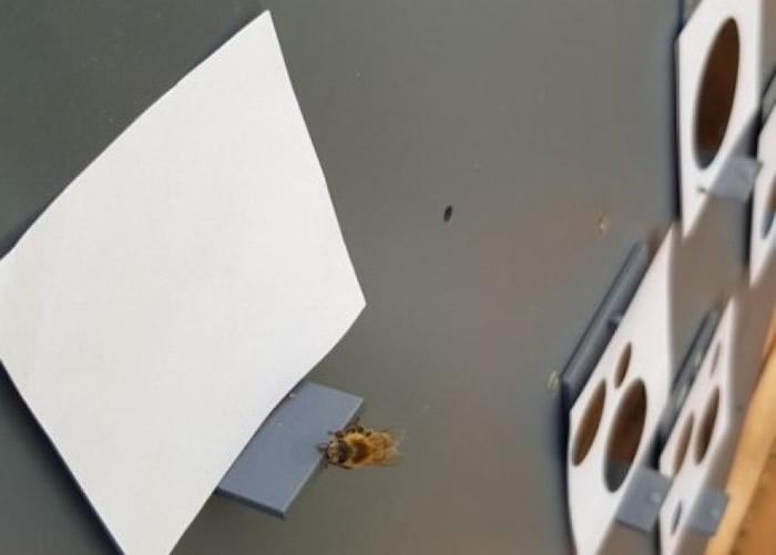 研究人员以点上黑点的纸张和食物奖赏训练蜜蜂。
