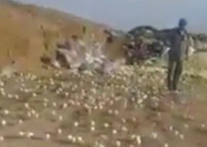 小鸡兵团占领垃圾岗,令人目瞪口呆。