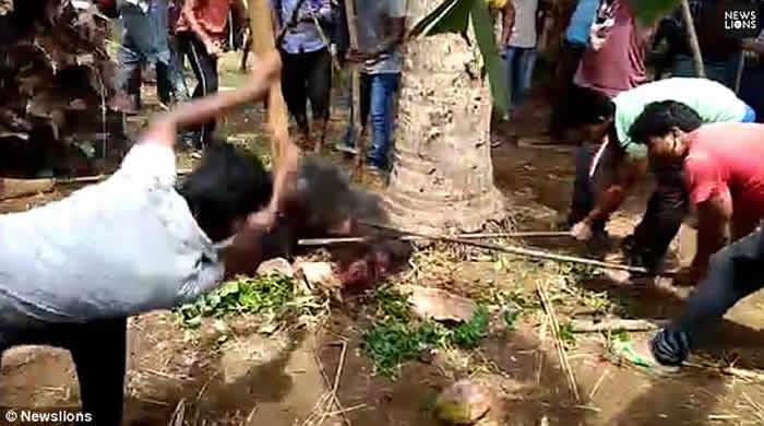 印度妻子遭野熊攻击惨叫 丈夫急救援却双双丧命