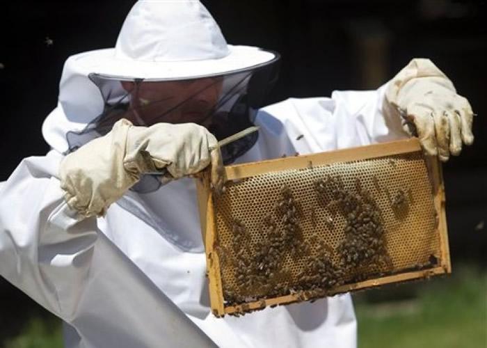 克罗地亚研究训练蜜蜂协助搜寻未爆地雷。