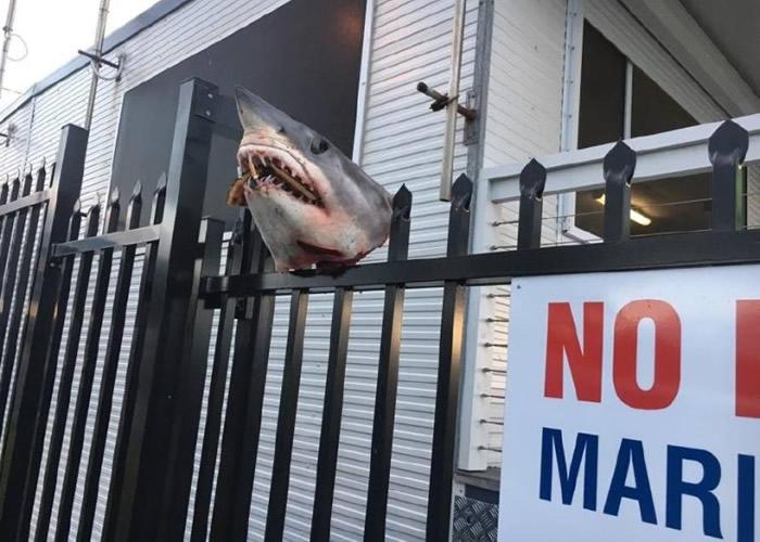 组织门外的铁栏插着鲨鱼头。