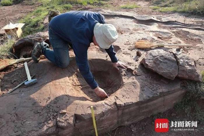 邢立达在考察恐龙足迹。摄影 王申娜