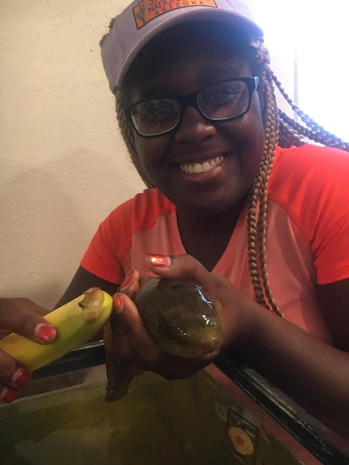 """美国亚利桑那大学博士生在研究时发现一只香蕉大小的""""怪物蝌蚪"""""""