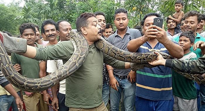 印度林区管理员与5米巨蟒自拍差点丧命