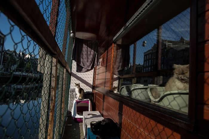 图左是九岁公猫博雷(Borre),它在猫船甲板上享受阳光,而图右是十岁母猫卡苏米(Kasumi),它正望向窗外。 PHOTOGRAPH BY MUHAMMED