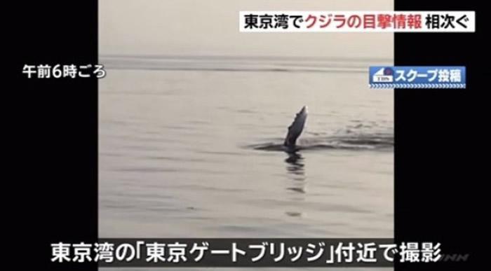 """日本东京湾惊传有人在京门大桥附近目击有""""水怪""""出没"""