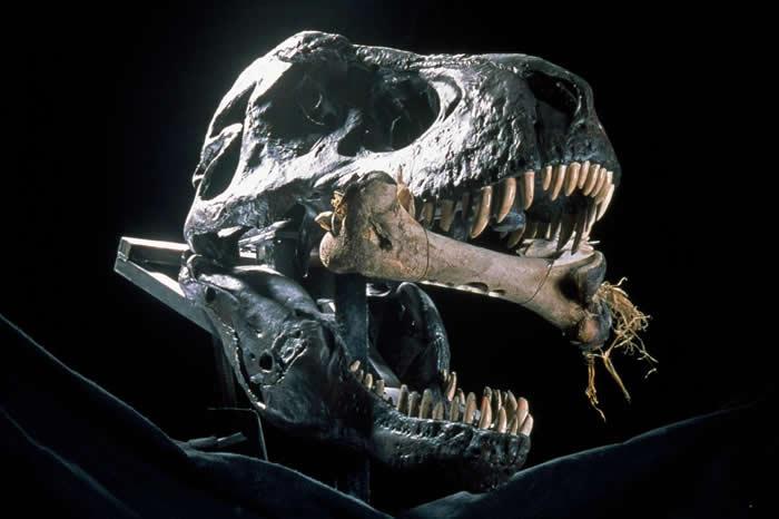 曾经漫步在地表上的恐龙之中,暴龙是辨识度最高的了,新书《恐龙兴亡史》(The Rise And Fall Of The Dinosaurs)的作者如是说。 PH