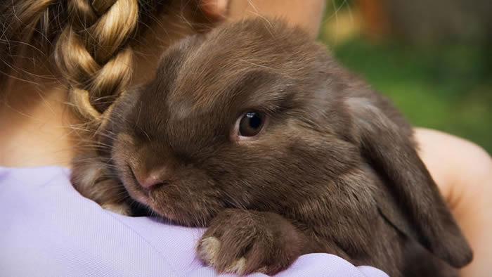 家兔为何更温顺?人类驯化导致兔子大脑结构发生变化