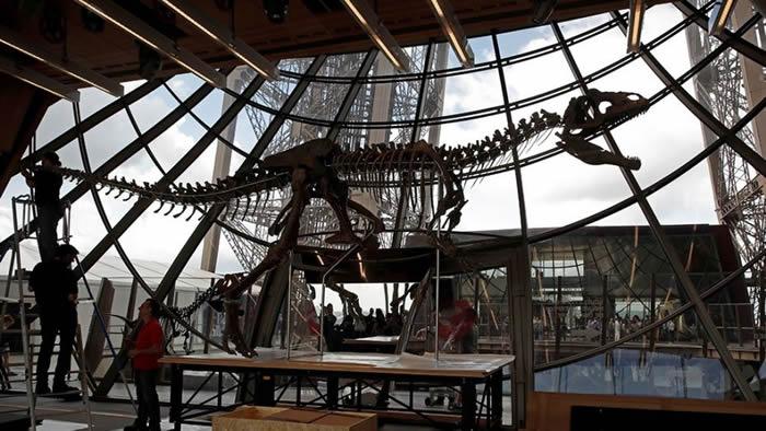 恐龙化石何以价值不菲