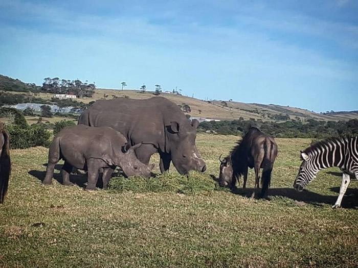 汤克(左)丧母后与禁猎区内其他动物为伴。